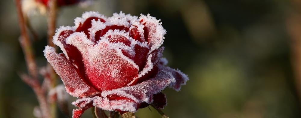 Cuando hiela en primavera – Cartas del Dr. Boix XV