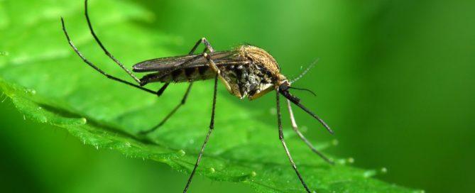 """""""Murcia, zona de alto riesgo para la llegada del Chikungunya"""""""
